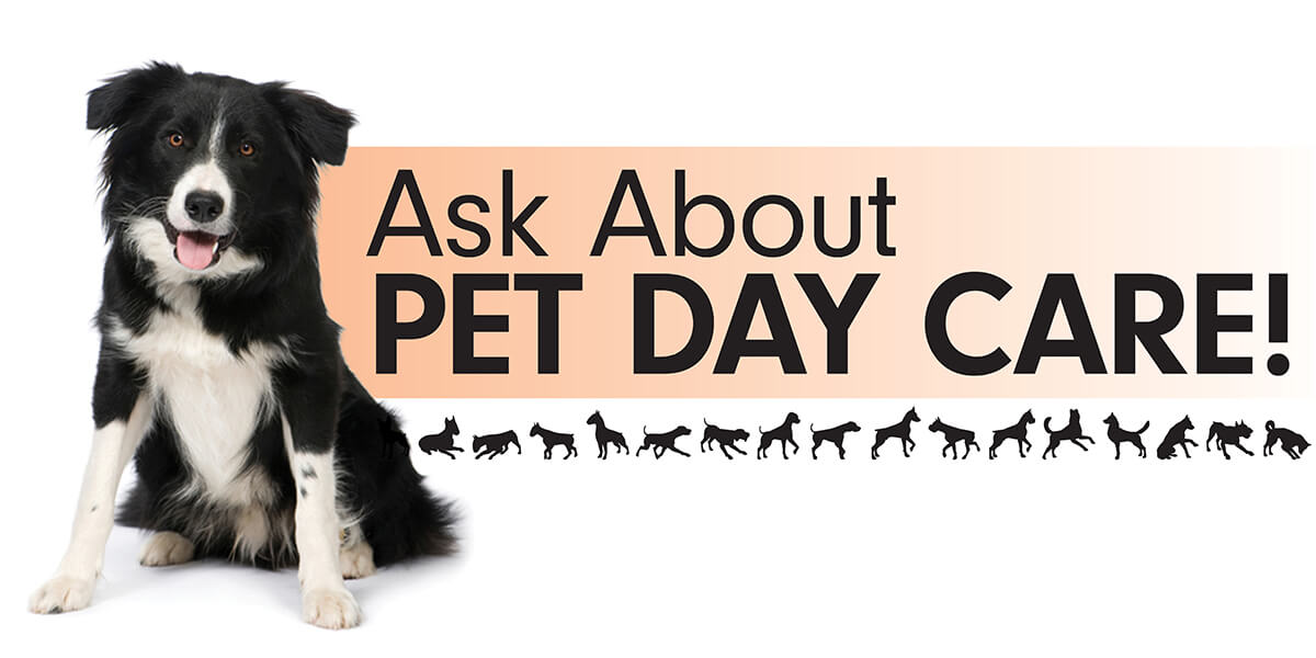 pet day care banner 4 x 2 barkleigh store
